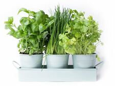 Herb Pots on a Tray by Dill and Mint - 3 Herb Pots in Tray