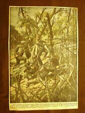 Retrocopertina Domenica del Corriere 1916 Soldati italiani tagliano reticolati
