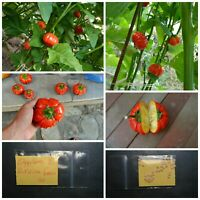 Tomato /'/'Debbie/'s Pink/'/' ~30 Top Quality Seeds Sweet Organic EXTRA RARE
