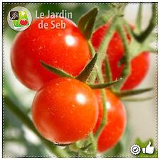 100 Graines de Tomate Cerise rouge