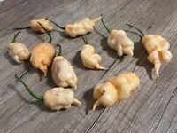 Carolina Reaper *Peach* 10 Samen **Eine der schönsten schärfsten Chilis der Welt