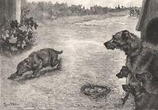 Un día triste Perro: devolución en penitencia. perros, antiguo de impresión, 1887