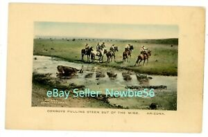 Arizona AZ - COWBOYS PULLING STEER FROM MIRE - Fred Harvey Hand Colored Postcard
