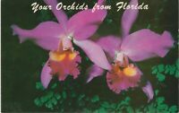 Vintage 1900's Postcard Purple Orchids from Florida
