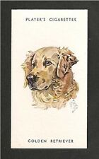 GOLDEN RETRIEVER Introduced by Lord Tweedsmouth as a gun-dog 1930's print card