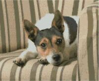 """Jack Russell Puppy Dog Counted Cross stitch kit Size 28.3cm x 23.2cm(11"""" x 9"""")"""