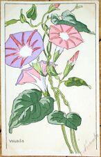 1903 Art Nouveau French Postcard - Petrea Volubilis/Queen's Wreath Flowers