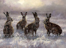 Wildlife, Hare Christmas cards pack of 10 by John Trickett C391x