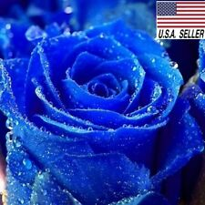 50++ Rare Blue Rose Bush Seeds Beautiful & Exotic perennial flowers USA-SELLER!