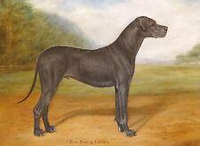 Fine Grande 1910 Gran Danés Azul Retrato Pintura al Óleo Antiguo Perro Fred thurlby