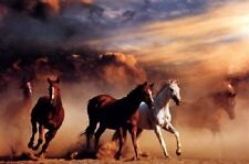 "Wild Horse Stampede photography poster 24 x 36"" Mustangs in the desert"