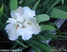 "2 ""Coral Chalice"" Award Winner Reblooming Tall Bearded Iris Rhizomes"