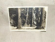 Vintage 1920s Real Photo Postcard RPPC A Driveway in Stanley Park Vancouver BC