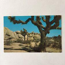 Joshua Trees on the Desert Unposted Postcard