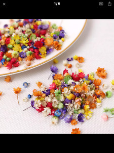 200x Real Dried Flowers For DIY Craft Epoxy Resin Jewellery Soap Candle Making
