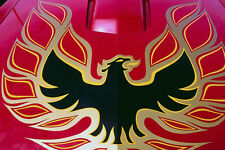 778071 Pontiac Trans Am Screaming Eagle Hood A4 Photo Print
