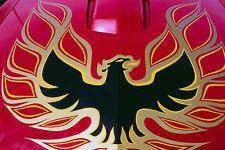 778071 PONTIAC TRANS AM Screaming Eagle capuche A4 papier photo