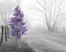 Purple Gray Black Home Decor Wall Art Photo Print Trees Landscape Rural Picture