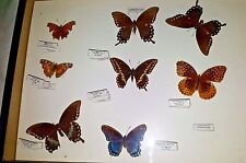 Lot of 8 real framed mounted lepidoptera  butterflies lot in 12 x 16 display