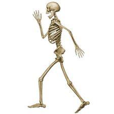 Decoración Esqueleto Articulado - 94 Cm De Alto-Cartón Halloween Fiesta Decoraciones