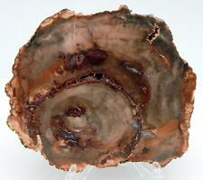 "5"" Petrified Wood Slab Fossil Polished on Both Sides W/Stand Madagascar B511"