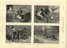 1889 St Dadd Charming Cartoon Cat Dog Pigeons Look Before You Leap