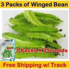 3X 25 Seed Winged Bean Plant Thai Herbs Vegetables Spice Organic Garden Healthy