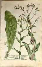 Botanical Print Antique Weinmann, Phytanthoza Iconographia, Prickly Lettuce,1748