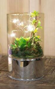 Glass Terrarium with LEDs, green artificial succulents, lights up, white lights