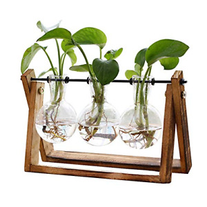Plant Terrarium with Wooden Stand, Air Planter Bulb Glass Vase Metal Swivel...