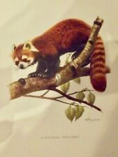 Ancienne Affiche Poster Art Print A3 Mammifères P94 Petit Panda Roux Himalaya
