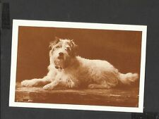 Nostalgia P/C Caesar Long-Haired Fox terrier Dog of King Edward V11 1910