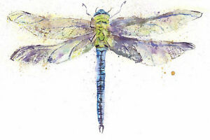 Limited Print of DRAGONFLY original watercolour by HELEN APRIL ROSE   325