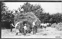 Agriculture Farming Hay Harvest Horse Drawn Wagon C-1910 RPPC real photo 10068