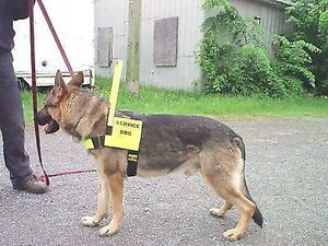 DOG HARNESS SERVICE DOG ASSISTANCE DOG THERAPY DOG YOU PIC COLORS TEXT ETC...