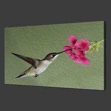 HUMMINGBIRD PAINTING WALL ART PICTURE BOX CANVAS PRINT 30 X 20 Inch WALL ART