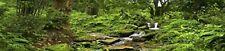 New listing Reptile Habitat Background; Rain Forest with Stream, for 36Lx18Wx18H Terrarium,