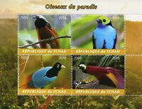 Chad 2018 MNH Birds of Paradise Blue Raggiana Bird-of-Paradise 4v M/S Stamps