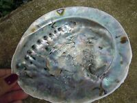 Large Natural Abalone Shell (Rough Exterior) Mother of Pearl Sea-Shells,Smudging