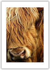 Greetings Card Birthday / Blank Notelet - Highland Cow Hairy Shaggy Farm Animal