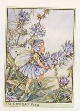 Flower Fairies: The Chicory Fairy Vintage Print c 1930 Cicely Mary Barker