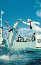 Postcard Florida Palm Coast Marine Studios Marineland Feeding Time Dolphin 1960s