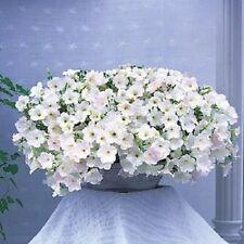 Petunia Opera Supreme Fl White 10 Pelleted  Seeds  Garden Seeds 2u