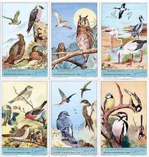 Chromo Liebig Sang. 1868 ITA Gli Uccelli Protetti Brooke Bond ANNO 1975