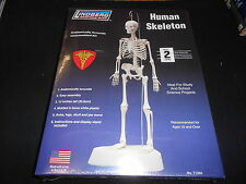"LINDBERG SCIENCE KITS 71304, 14"" HUMAN SKELETON PLASTIC MODEL KIT"