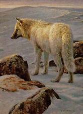 "Robert Bateman - Arctic Evening White Wolf - 180 S/N Giclee  Canvas 18"" x 24"""
