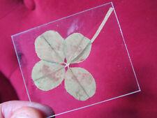 idée cadeau : 1 vrai trèfle 4 à feuilles sur support transparent