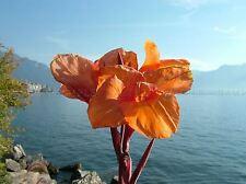 NATURE PHOTO PLANT FLOWER ORANGE PETAL LAKE GENEVA POSTER ART PRINT BB1564A