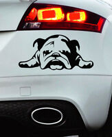 BULLDOG BRITISH CAR STICKER DECAL BUMPER WINDOW VINYL FUNNY LAPTOP NOVELTY VAN