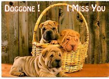 Shar Pei Puppies Postcard Doggone I Miss You Basket Dogs Wrinkly Posted 1996